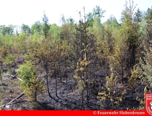 Jungwald gerät in Flammen
